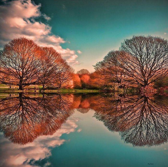 درختان در آب