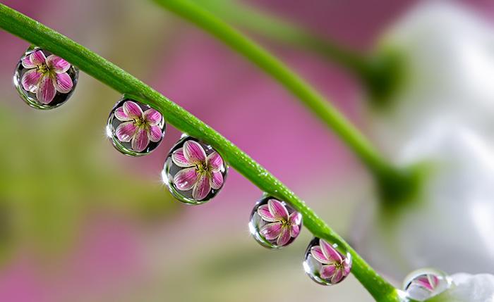 گل ها درون قطره های آب