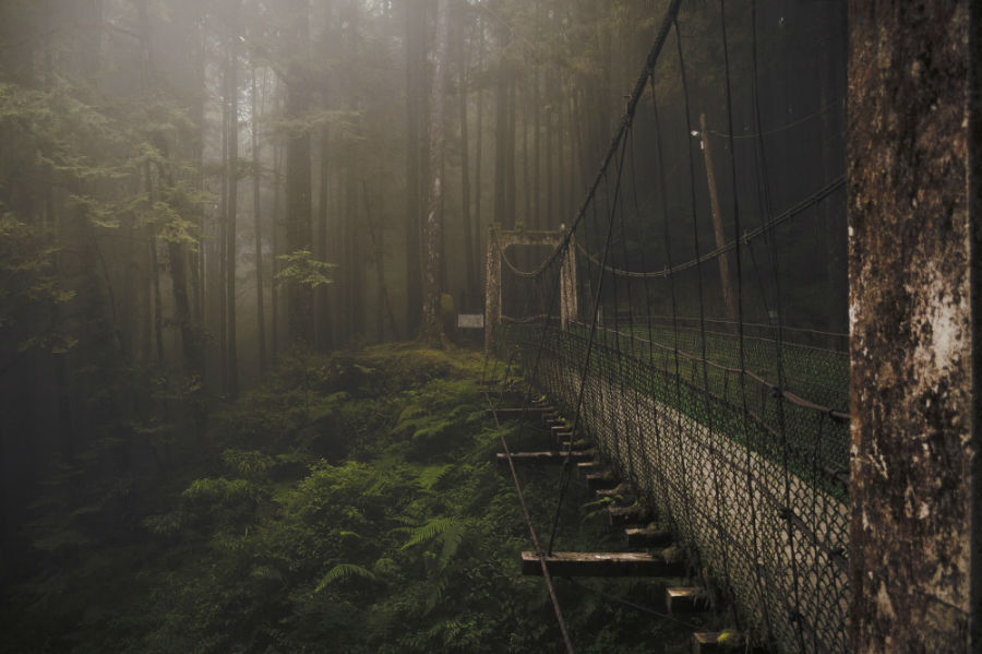 پل جنگل آلیشان، تایوان