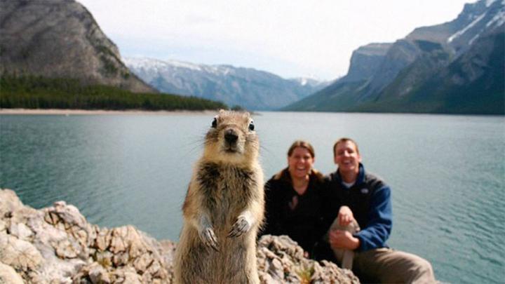 ملیسا برانت و همسرش در سال 2009 برای گردش به پارک ملی بانف کانادا رفته و درست لحظه ای که می خواهند خاطره حضور خود در آنجا را ثبت کنند، با حضور یک سنجاب دوست داشتنی در کادر متعجب می شوند.