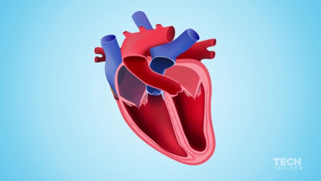 در هنگام ایست قلبی چه اتفاقی برای بدن ما رخ می دهد؟ [تماشا کنید-زیرنویس فارسی]
