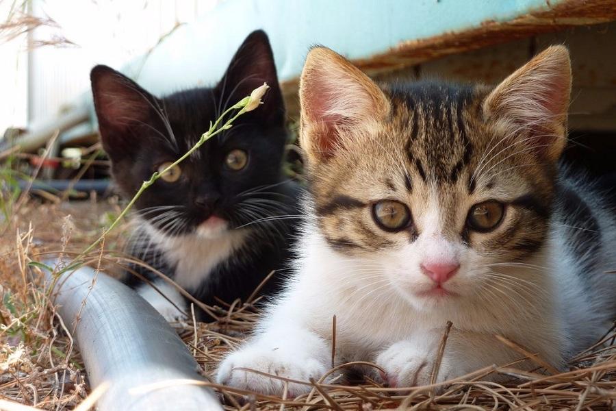 چرا گربه ها از دیدن خیار در پشت سر خود این همه وحشت می کنند؟ [تماشا کنید]
