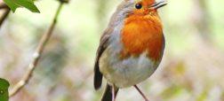 شانس شکار شدن پرندگان به اندازه مغز آن ها بستگی دارد