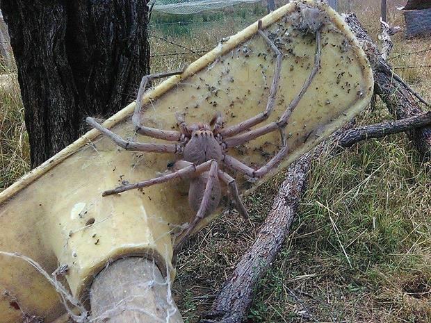 spider-w700
