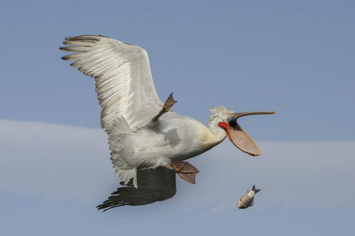 the-kenya-airways-creatures-in-the-air-winner-damn-nicolas-de-vaulx-w700