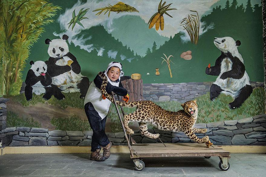 11- مسوول نگهداری پانداها در حال حمل یک یوزپلنگ تاکسدرمی شده به سمت قفس پانداهاست تا آنها را با بزرگ ترین شکارچی و دشمن خود آشنا کند. واکنشی که پانداها نشان می دهند، مشخص خواهد کرد که آیا توان محافظت از خود در دل طبیعت را خواهند داشت یا خیر.