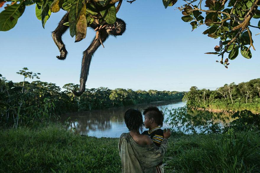 33- مردم محلی پرو در جنگل های مانیو شکار و کشاورزی می کنند اما جالب است بدانید هر خانواده برای خودش این کار را انجام می دهد. یکی از محبوب ترین شکارها که اتفاقا، بهترین حیوان خانگی هم محسوب می شود، میمون های عنکبوتی هستند.