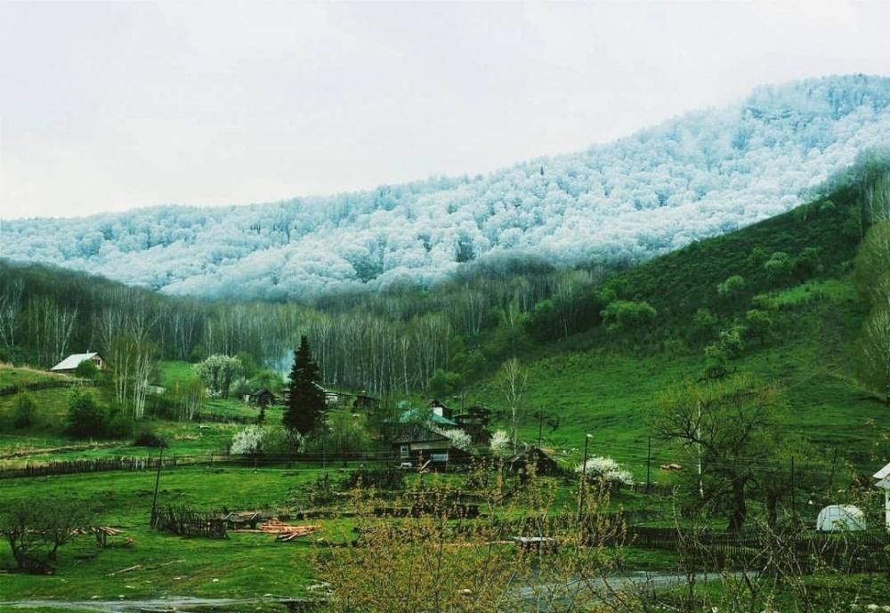 برف در جنگل