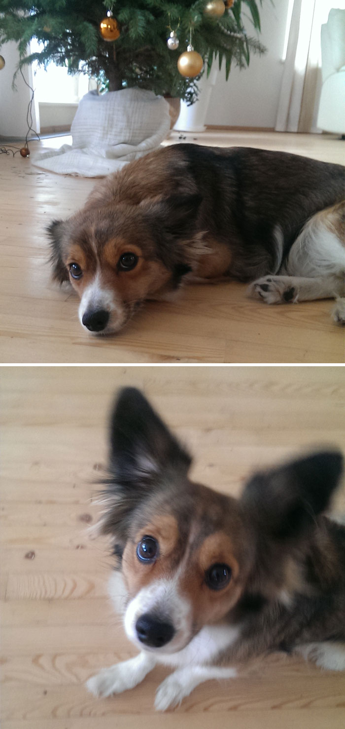 before-after-called-good-boy-120-5860e751a06eb__700