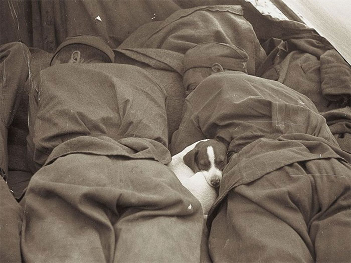 سربازان روسی در طول جنگ جهانی دوم با سگ خود خوابیده اند