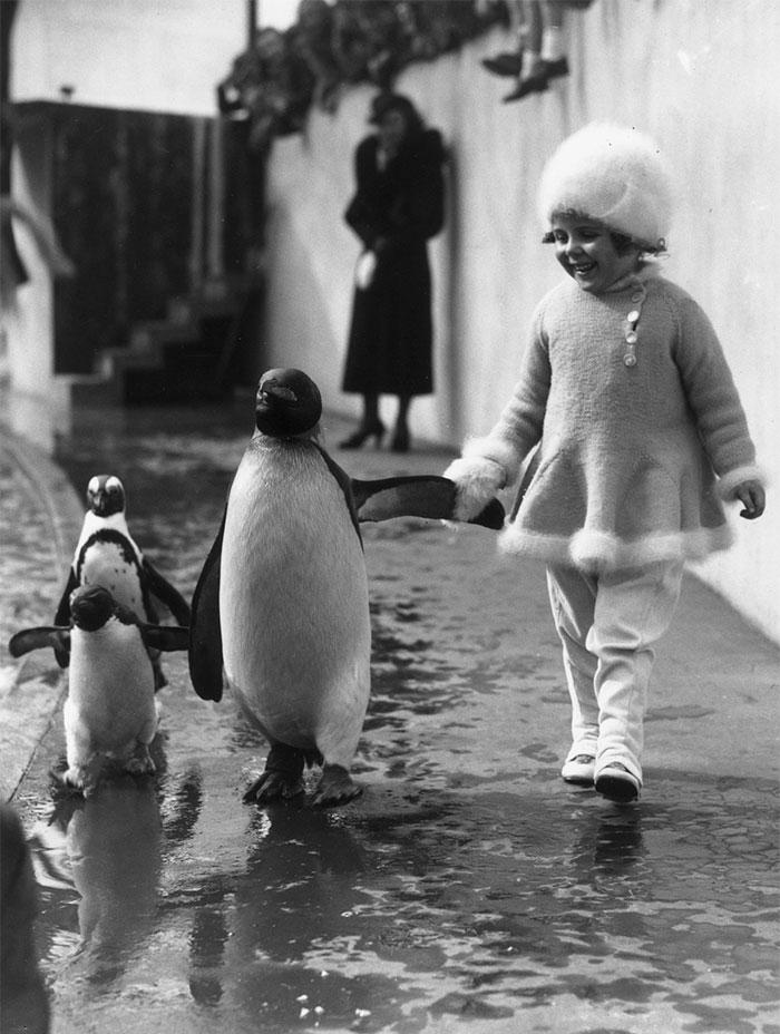 دختربچه ای که دست در دست پنگوئن ها در باغ وحش لندن در حال قدم زدن است - 1937