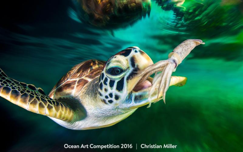 مروری بر بهترین عکس های گرفته شده از جهان زیرآب در سال ۲۰۱۶