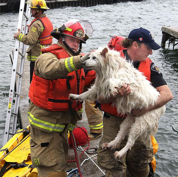 نجات سگ از غرق شدن در آب های سرد دریاچه اونتاریو
