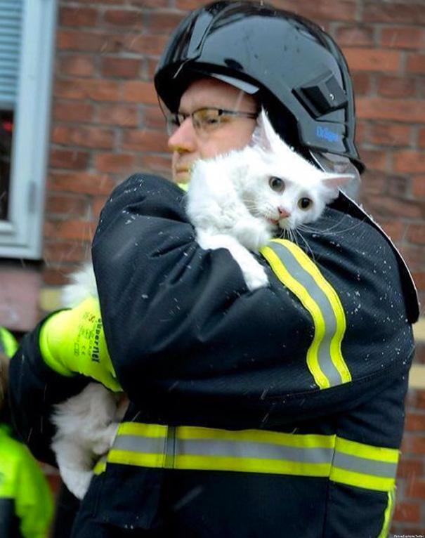 نجات گربه خانگی از آتش در دانمارک
