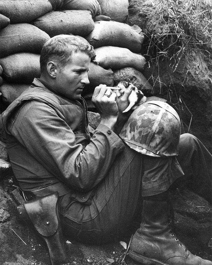 یک سرباز نیروی دریایی به نام فرانک پرایتور در حال شیر دادن به بچه گربه ای است که مادر خود را از دست داده است.