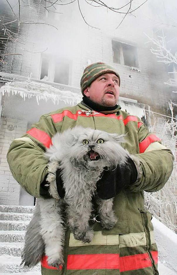 نجات گربه خانگی از آتش در روسیه