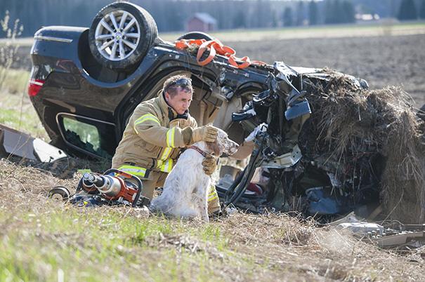 نجات سگ پس از تصادف خودرو