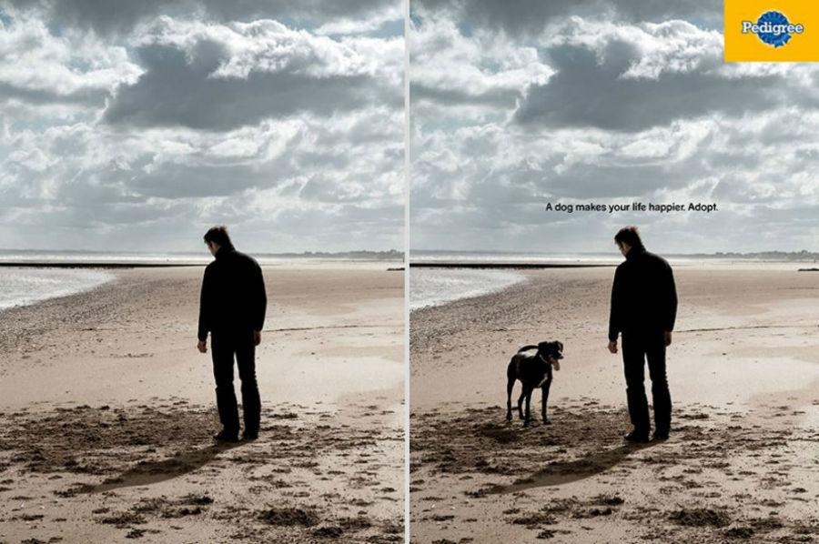 تبلیغ کمپانی Pedigree: یک سگ می تواند زندگی شما را شادتر کند