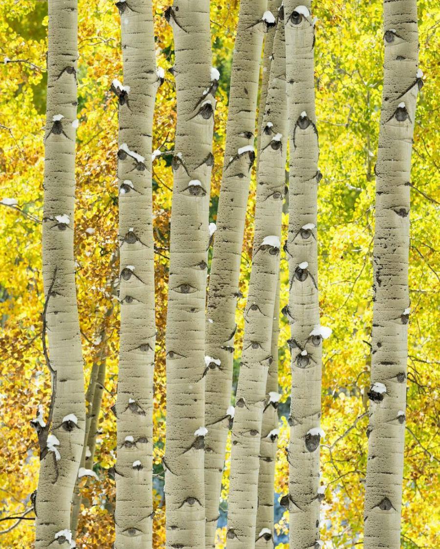 کمی با دقت تر به این درختان صنوبر نگاه کنید ...
