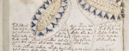 _68288328_voynich_manuscript_(66)