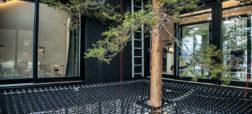 ساخت هتل درختی بسیار زیبا در یکی از بهترین جنگل های کشور سوئد