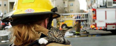 گربه ای که در آغوش امدادگر خود آرام گرفته