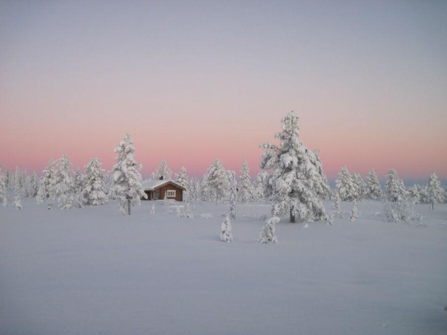 جنگل بوریل - نروژ