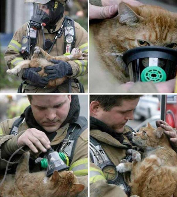 نگاه سرشار از محبت به گربه ای که از آتش نجات داده شده