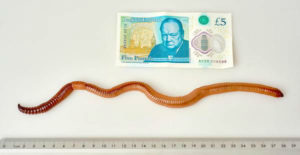 a99954_dave-giant-earthworm-01.adapt.1900.1-w750