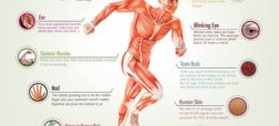 amazing-facts-about-the-human-body_535a0ad0e6eaf_w1500