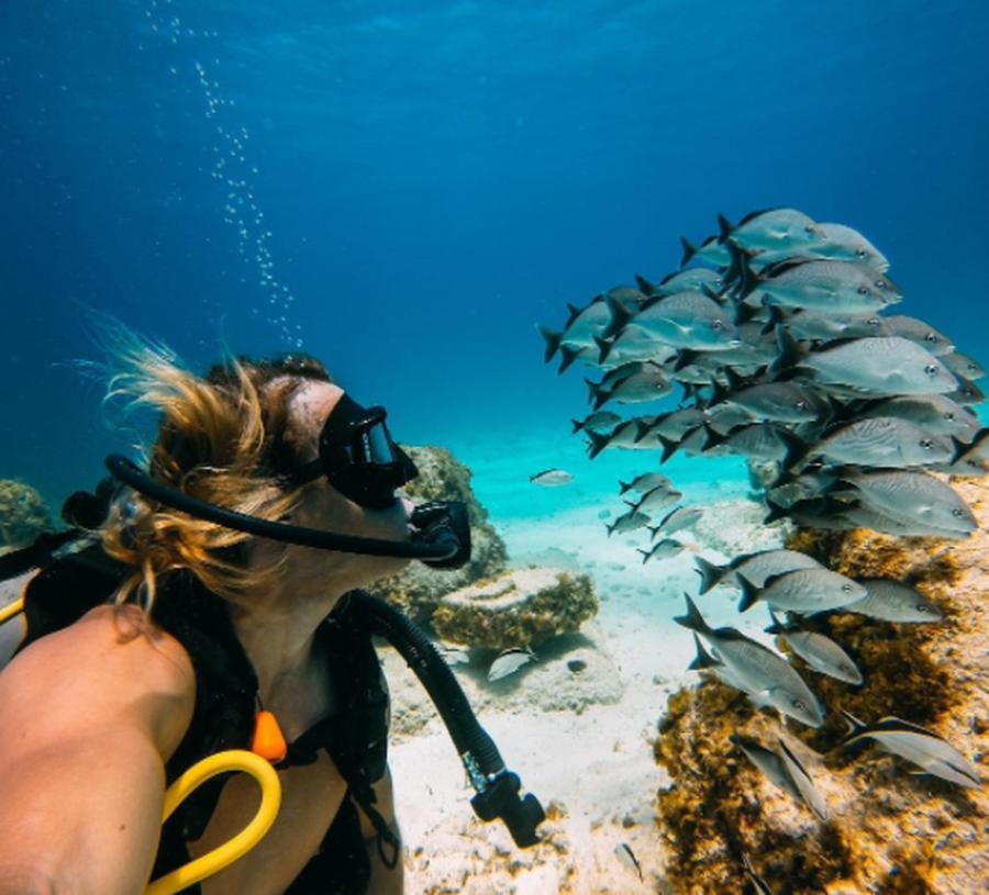 gopro-swimmingfishes