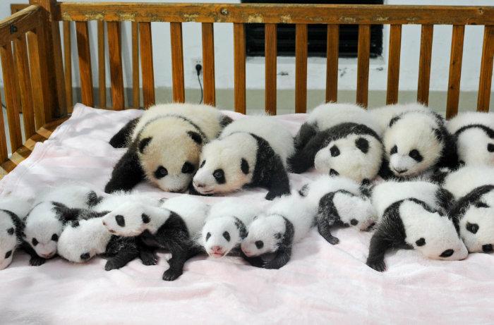 m-panda-crib-980x645-w700