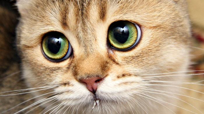 بیماری های گربه ها