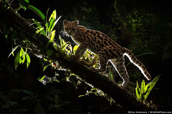 برنده اصلی+ برنده بخش پرتره حیوانات -جنگل های آمازون