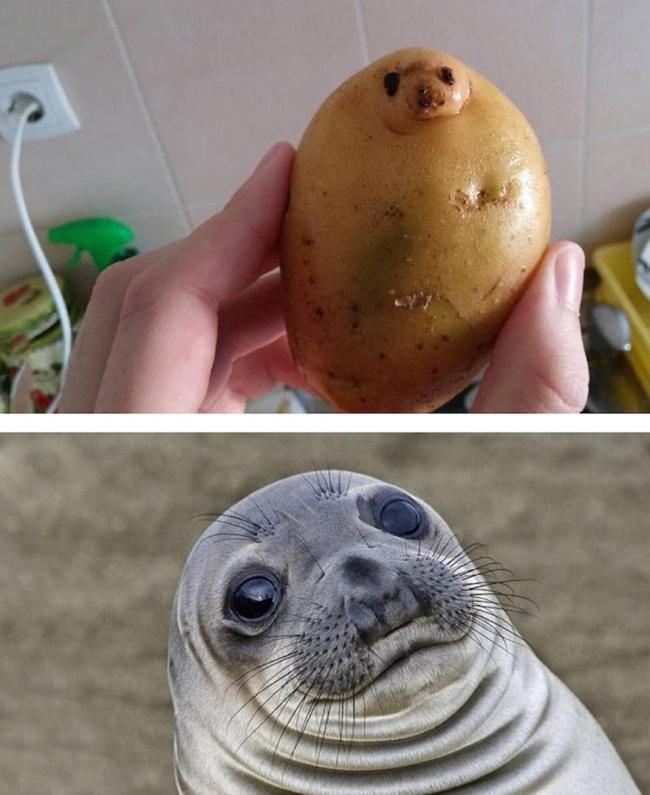 این سیب زمینی و فک دریایی با هم مو نمی زنند.