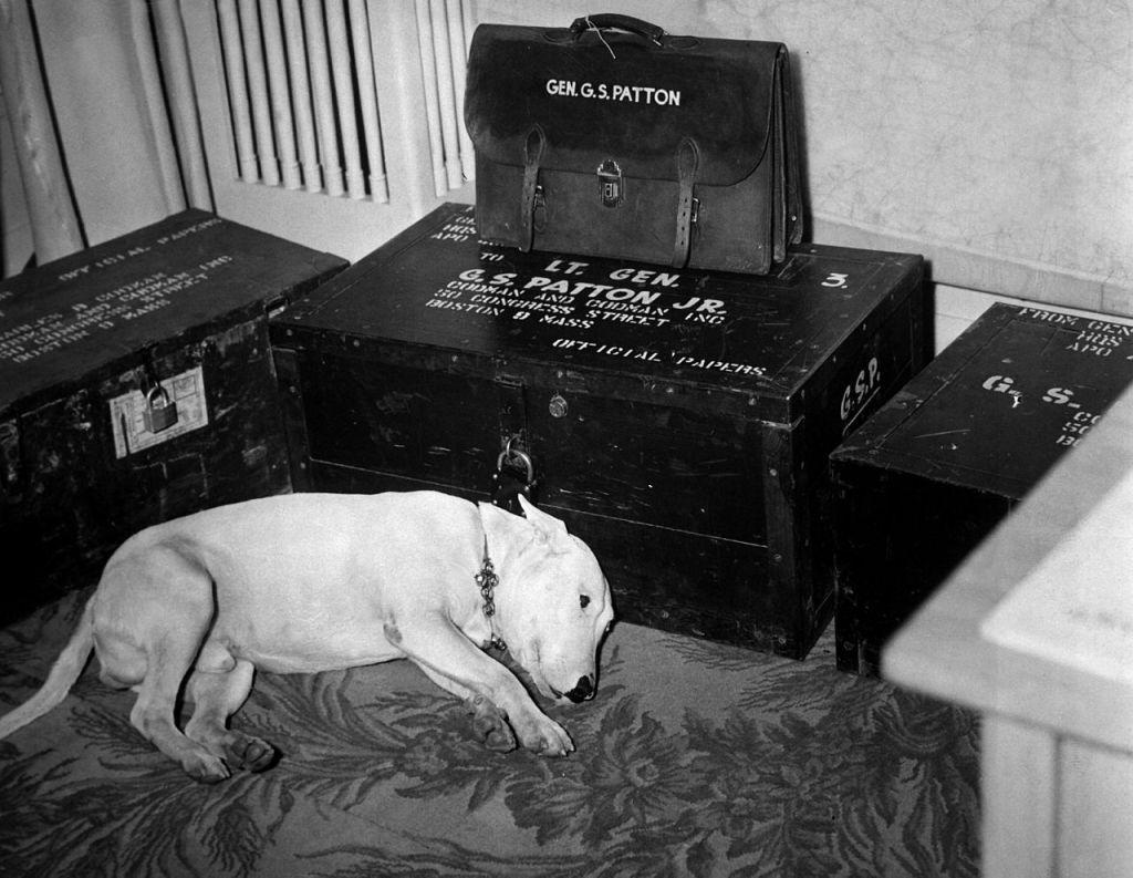 ویلی، سگ جرج اس پتن در حال سوگواری در غم از دست دادن وی، یک روز پس از مرگ او در سال 1945