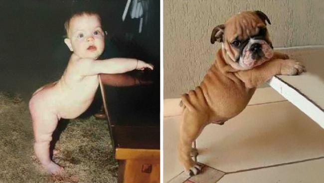 شکم و پاهای این سگ همانند کودک نوپاست.