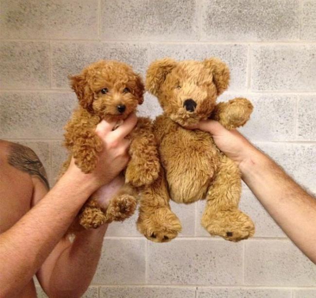 سگ واقعی را از خرس عروسکی تشخیص دهید.