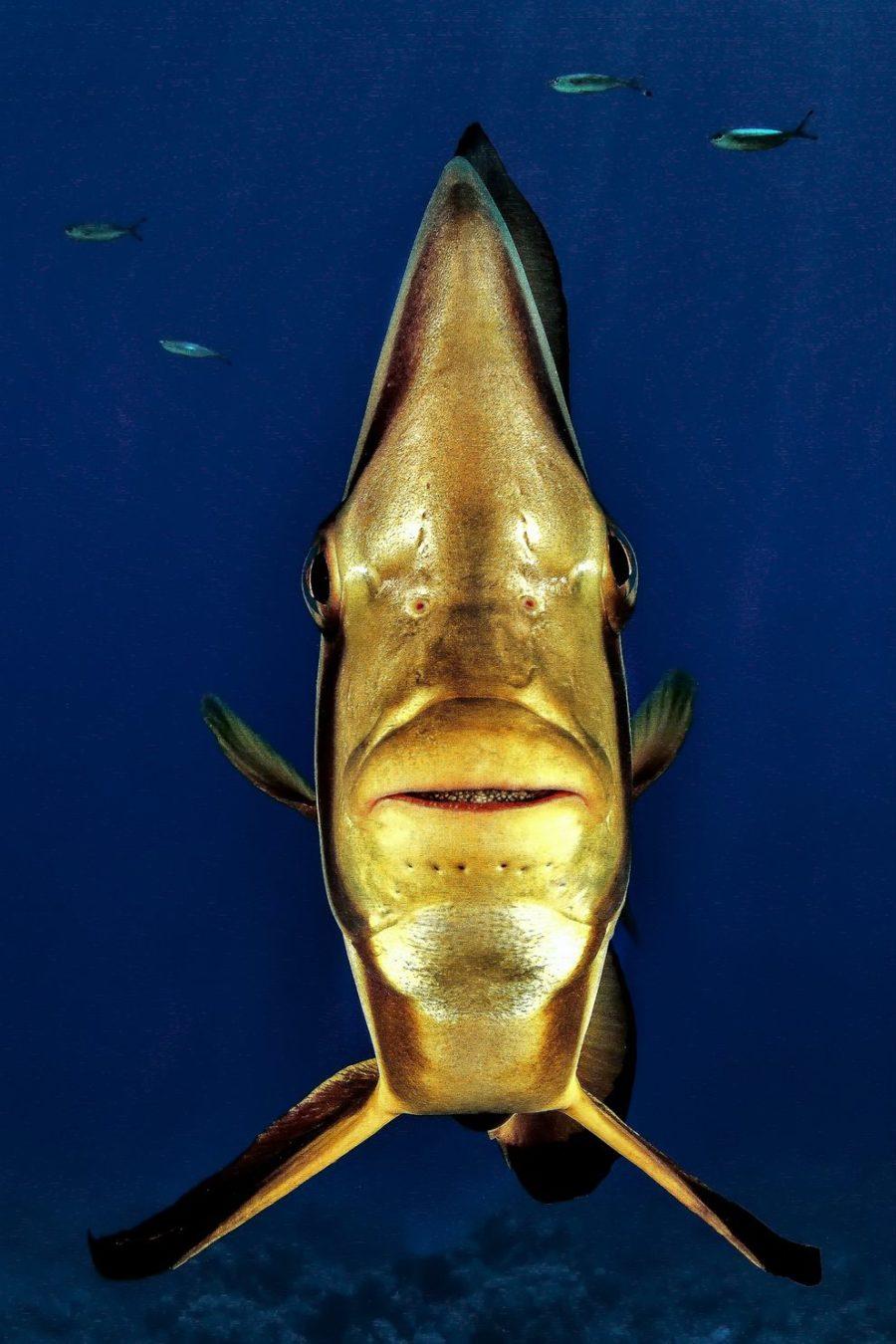 تصاویری شگفت انگیز از دنیای زیر آب که هر بیننده ای را متحیر خواهند کرد