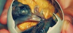 این غذای خیابانی فیلیپینی ها، جنین اردک درون تخم است که درون آب جوشانده شده و مستقیما از درون پوسته آن خورده می شود. البته گاهی به همراه سرکه، سس سویا و برگ بو هم پخته شده و درون نان سرو می شود.