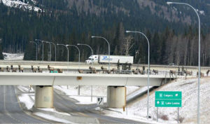 animal-bridges-wildlife-crossings-70-58aa9e5f7c98e__880-w900-h600