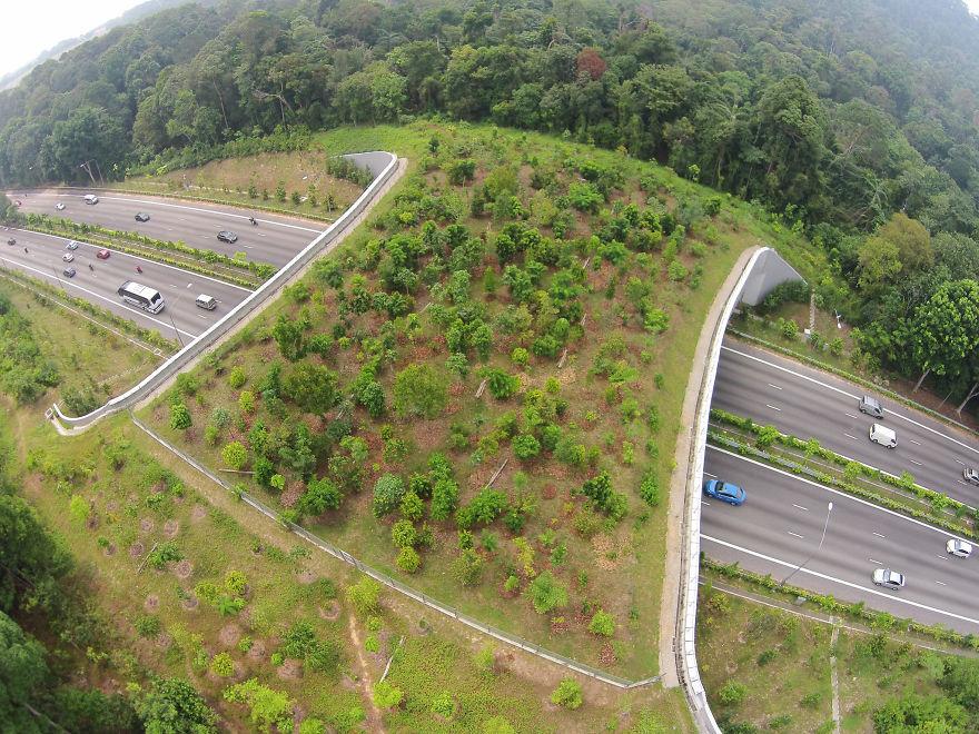 پل هوایی سبز در سنگاپور