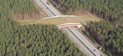 پل ها و تونل های خلاقانه و جالبی که در نقاط مختلف دنیا برای عبور حیوانات ساخته شده اند