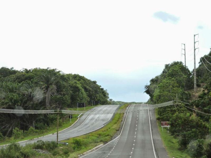 پل هوایی روی جاده برای عبور میمون ها و دیگر جانوران در منطقه باهیا در برزیل