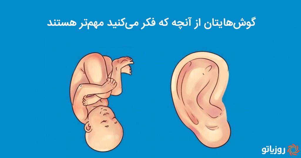 رازهای عجیبی که شکل گوش تان در مورد شما برملا خواهد کرد