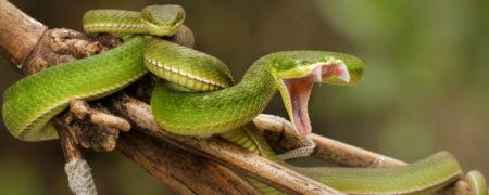 robert_ferguson_-_hong_kong_snakes-w900-h600