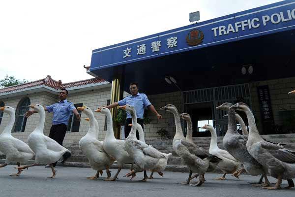 69ed5b879c5e7518ec12_police-geese-w700