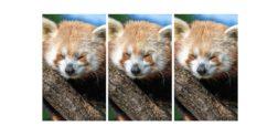 چالش: آیا می توانید بگویید کدام حیوان با بقیه تفاوت دارد؟