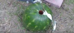 ریختن آلومینیوم مذاب در هندوانه چه بلایی بر سر آن می آورد؟ [تماشا کنید]