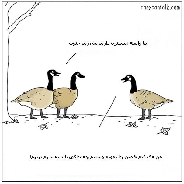 Funny-Animal-Comics-They-Can-Talk-Jimmy-Craig-Part2-018-58b3f0a1c5641__605